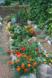Zinnia and Marigold Interplanted with Vegetables