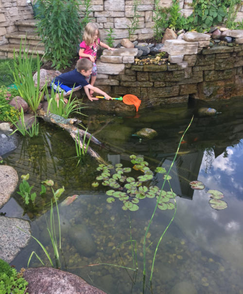 Backyard Frog Pond water features and water recycling for wisconsin landscapes
